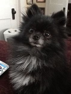 Turbo was taken from our yard on May He has a chip. Still hoping for his safe return. ~ pined by Brenda Kools Underwood