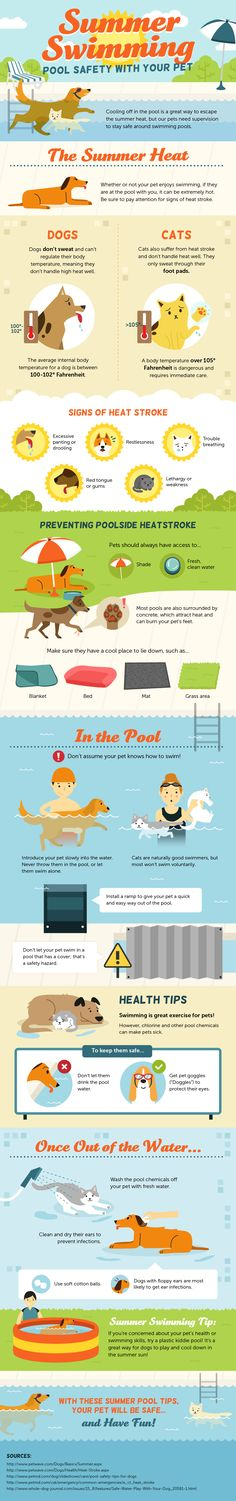 Pet Pool Safety. Credits to Amber Kingsley for this amazing infographics.