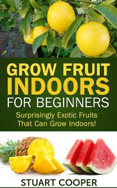 Grow Fruit Indoors For Beginners: Surprisingly Exotic Fruits That Can Grow Indoors! Fruit Plants, Fruit Garden, Edible Garden, Fruit Trees, Box Garden, Citrus Trees, Container Garden, Growing Veggies, Growing Herbs