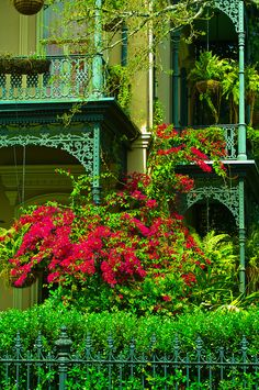 Bougainvillea (flowering plants), Garden District, New Orleans, Louisiana