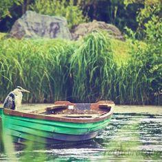 Garça no Barco