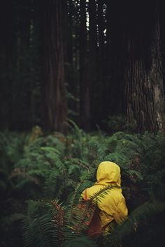 infinite-paradox: david-talley: Jake in the Redwoods. - Form Studio - infinite-paradox: david-talley: Jake in the Redwoods. infinite-paradox: david-talley: Jake in the Redwoods. Adventure Awaits, Adventure Travel, Photos Voyages, Mellow Yellow, Yellow Coat, Yellow Raincoat, Go Outside, Belle Photo, The Great Outdoors