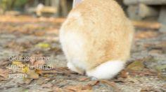 Ukonoshima, Rabbit Island, Japan Rabbit Island, Corgi, Japan, Friends, Animals, Amigos, Corgis, Animales, Animaux
