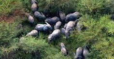「asian elephants」の画像検索結果