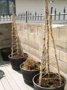 building a cucumber trellis - just finished cutting a dozen new bamboo stakes today!