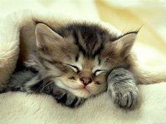 Pisic mic si somnoros!