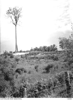 'Views of burned out POW camp sites huts, etc in the POW camp at Sandakan.' 'One area in No. 1 Compound of Sandakan POW camp was found to contain approximately 300 bodies believed to be of those ...