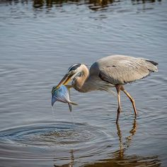 On the hunt in Huntington Beach State Park in Murrells Inlet, SC.     http://www.visitmyrtlebeach.com/things-to-do/nature/state-parks/  (Photo via Instagram by @jhucksphotog)