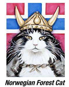 Viking Norwegian Forest Cat