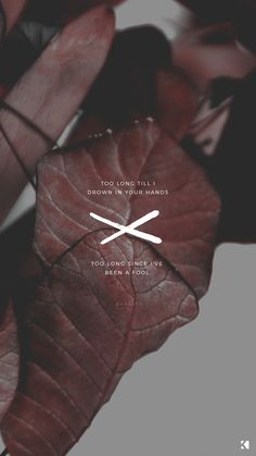 Troye Sivan Lyrics | Wallpaper Phone Backgrounds by KAESPO Design