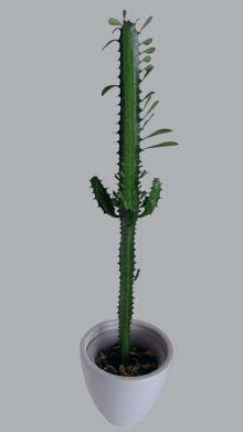 EuphorbiaTrigona.png