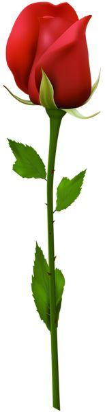 Red Rose Clip Art PNG Image