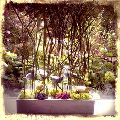 Garden at home