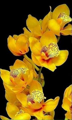 All About Yellow Flowers For Your Garden & Put A Smile On Your Face! Get yellow flowers and growing information to add cheerful, sunny yellow plants to your landscape. Yellow Plants, Yellow Orchid, Yellow Flowers, Colorful Flowers, Spring Flowers, Plants Sunny, Beautiful Rose Flowers, Unusual Flowers, Amazing Flowers