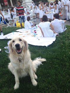 Bianco naturale! #raiexpo #expo2015 #milano #cenaconme #we4expo #flashmob