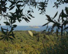 Cerbicales - Îles Cerbicale — Wikipédia