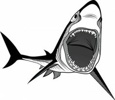 This is about a shark tattoo, meanings, designs and more pictures.