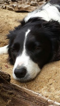 Click visit site and Check out Best Border Collie T-shirts. This website is superb. Tip: You can search your name or your favorite shirts at search bar on the top.