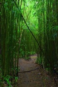 Between the beaches, bamboo forests and lava rock structures, Hana, Maui has it all. And look how gorgeous!
