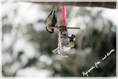 Birds canteen