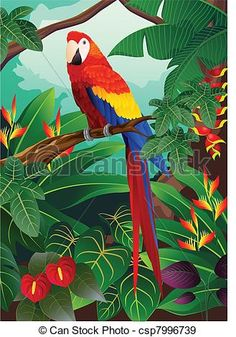 Image result for macaw ilustrations