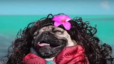 Watch Doug the Pug go full 'Moana' and be inspired by his chill vibes