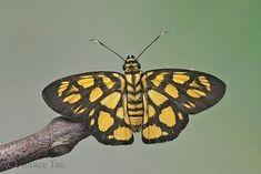 Butterflies And Moths 8