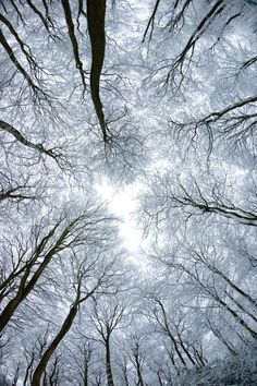 Trees in Snow by pnewbery.deviantart.com on @deviantART