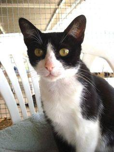 Helfende Hände e.V. - Katze Gwenny (EKH 1-2 Jahre) sucht ein Zuhause…