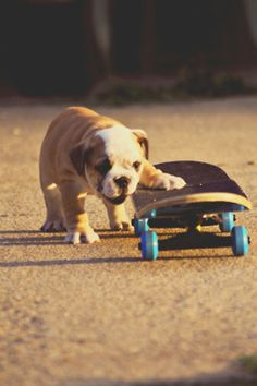 Wish I taught my Biggie how to skateboard! He'd be so capable to do it.
