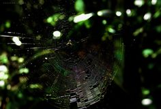 Iridescent spider web by Eduardo Vilela