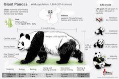 20 best panda bear images panda bear, panda bears, pandas