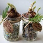 10 DIY holiday gifts - Paperwhites, DIY from Domaphile