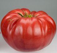 Beefsteak Heirloom Tomato Seeds | Fresh Life Now