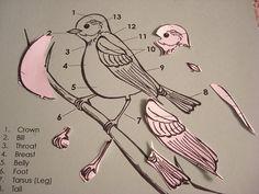 Montessori bird unit - parts of a bird. Coloured sheet to highlight