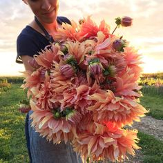 My new favorite dinner-plate Dahlia 'Sherwood's Peach', getting her turn in front of the camera tonight. This epic photo was captured by Wait until you see what he got with the big camera 🙉💥 Fall Flowers, Fresh Flowers, Beautiful Flowers, Wedding Flowers, Autumn Flowers Garden, Exotic Flowers, Purple Flowers, Flower Farmer, Cut Flower Garden