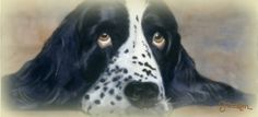 In love with my rescue Springer Spaniel who inspires me to write for this blog and to hopefully help other rescue Springers find their forever homes.