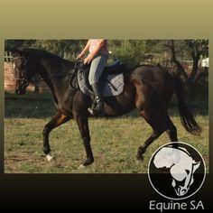 Sardine Run - Unregistered Thoroughbred - Horses for Sale Detail Thoroughbred Horse, Horses For Sale, Running, Animals, Racing, Animales, Animaux, Jogging, Lob