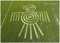 crop circles 2013 photography - Google Search