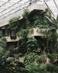 The Barbican Conservatory; a very special place where leaves drip from concrete ledges and vines creep up the walls. #HaarkonGreenhouseTour #HaarkonInLondon