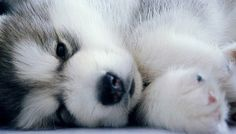 .sooo cute