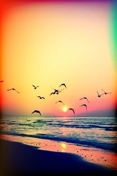 << beach sunset >>