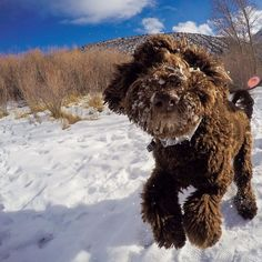 Let's get a fresh jump into this week!  : @kimbermassey  And don't forget to enter the: #PooYearsResolution contest! by grizzlythedoodle