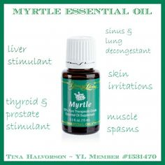myrtle - 12 oils of ancient scripture Essential Oils Sinus, Myrtle Essential Oil, Essential Oil Uses, Young Living Oils, Young Living Essential Oils, Decongestant, Essentials, Pure Products, Bottle