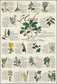 Image detail for -Herbs & Medicinal Plants Poster