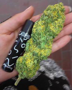 Buy Marijuana Online I Order Weed online I Buy Cannabis online I Edibles Buy Cannabis Online, Buy Weed Online, Cannabis Edibles, Cannabis Oil, Weed Art, Weed Seeds, Edibles Online, Smoking Weed, Bud