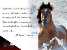 This is so true. Every day i wake up and run out to my horse. He is such a loyal companion! I have no idea what i would do without him! I love you Apache! Horse Poems, Horse Riding Quotes, Horse Sayings, Cowgirl And Horse, Horse Love, Equestrian Quotes, Western Quotes, Rodeo Quotes, Inspirational Horse Quotes