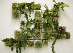 Living wall, succulent wall, and plant wall in austin, texas