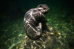 Музей подводных скульптур MUSA Британский скульптор Джейсон де  Кайрес Тейлор (Jason deCaires Taylor) недавно представил свою последнюю скульптуру из цемента, которая присоединилась к более чем 500 другим у побережья Канкуна, Мексика. Здесь находится монументальный музей, который называется MUSA (Museo Subacuatico де Арте). Это одно из уникальных мест, где можно увидеть искусство под водой.