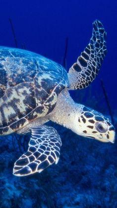 Turtle**.